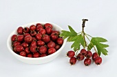 Haws in a small dish and a bunch of haws (hawthorn fruits)