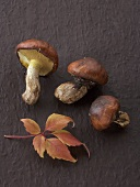 3 Slippery Jack mushrooms with autumn leaves on black background
