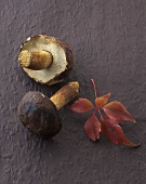 Two bay boletes on black background