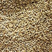 Rye grains (full-frame)