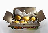 Fresh mangoes in a cardboard box
