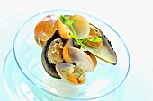 Steamed shellfish on glass plate