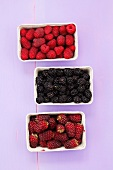 Tayberries (raspberry-blackberry cross), blackberries & raspberries