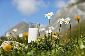 Glass of milk in a mountain pasture