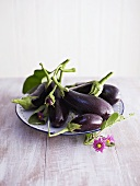 Aubergines with aubergine flower