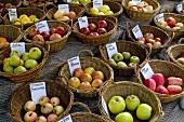 Viele Körbe mit regionalen Apfelsorten