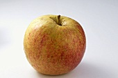 'Holländer Prinz' apple
