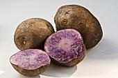 Kartoffelsorte 'Blauer Schwede'