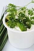 Pot of yoghurt with fresh herbs