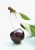 A sweet cherry with leaves