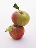 Two apples (variety Elstar)