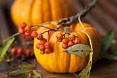 Pumpkins with rowan berries