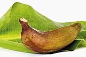 Red banana on banana leaf