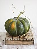 Green pumpkin on wooden box