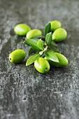 Fresh green olives with olive sprig