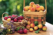 Still life with fresh apricots and plums