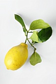 Lemon with stalk and leaves