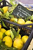 Fresh lemons on a market stall (Antibes, France)