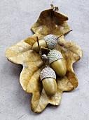 Eicheln auf herbstlichem Eichenblatt