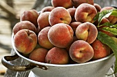 Freshly picked peaches in colander