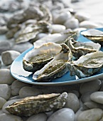Oysters with spinach sauce