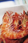 Prawns in polystyrene container