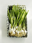 Small basket of spring onions