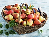 A basket of Forelle pears