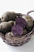 Several Vitelotte potatoes in basket