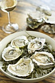 Frische Austern mit Algen in Schüssel, Weissweinglas