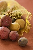 Various varieties of potatoes in net bag
