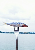 Sardine speared on fork by sea
