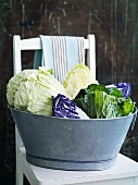 Various types of cabbage in zinc bath on chair