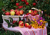 Apples in baskets, bunch of helenium, golden rod & obedient plant