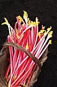 Sticks of fresh rhubarb in a basket