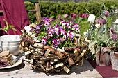Horned violets in a rustic basket (table decoration)