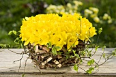 Rustic basket filled with daffodils