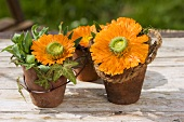 Marigolds, ivy and coir rope in terracotta pots