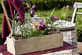 Pansies and fritillary plants in a wooden box