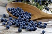 Fresh juniper berries on a wooden spoon