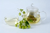 Hop tea in a glass teapot and fresh hops