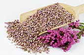 Heather (Erica), fresh and dried flowers