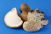 Birch bracket (Piptoporus betulinus, medicinal fungus)