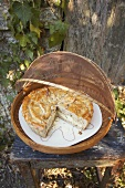 Sheep's cheese and herb pie