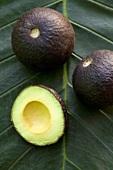 Black avocados on palm leaf