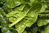 Fresh spinach leaves (close-up)