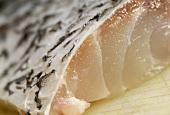 Swordfish (close-up)
