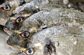 Gilthead bream with crushed ice
