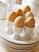 Brown boiled eggs in eggcups