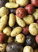 Various varieties of potato